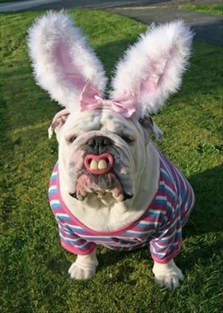 funny-easter-bunnies